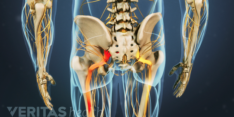 How The Sciatic Nerve Modified Our Lives In 2021